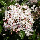 Tavaszi bangita